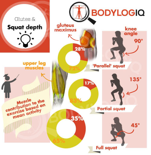 glutes-squat-depth_infograph